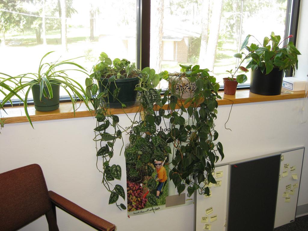 3 Ways to Mitigate Indoor Allergies in the Office